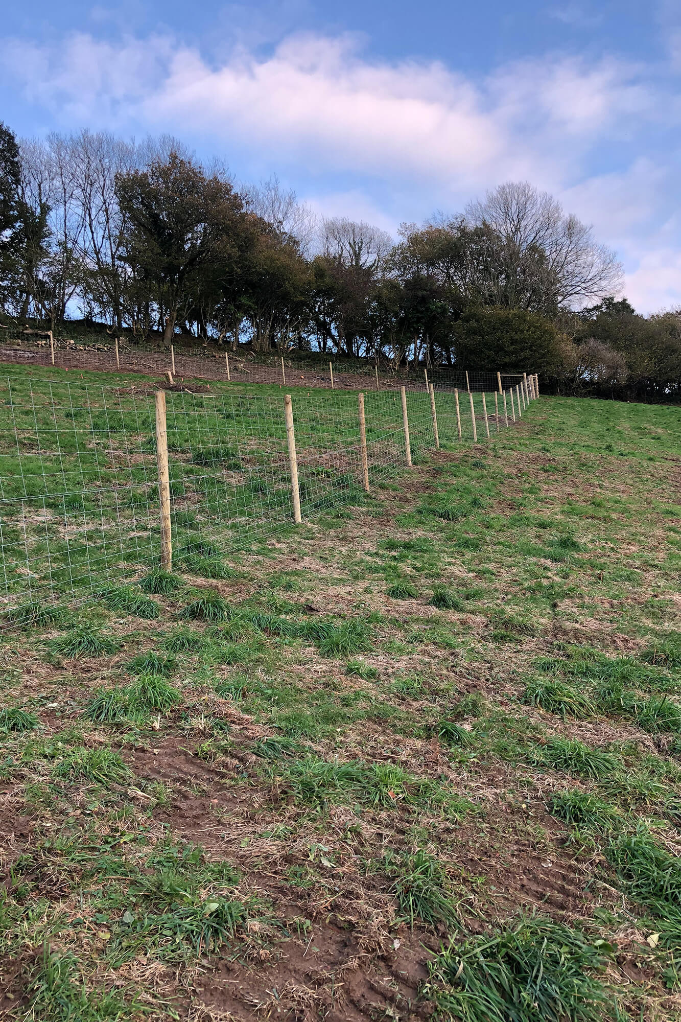 Fencing protection from livestock